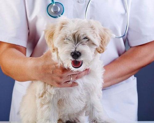 海拉尔宠物医院